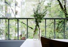 Ramo della ciliegia di uccello nella città di primavera Fotografie Stock Libere da Diritti