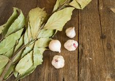 Ramo della foglia e dell'aglio di alloro su vecchio fondo di legno scuro con lo spazio della copia Immagine Stock