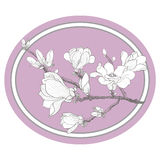 Ramo della magnolia Fotografia Stock Libera da Diritti