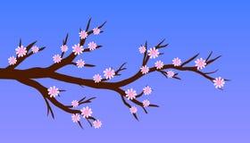 Ramo della molla del fiore Immagine Stock