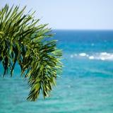 Ramo della palma su un fondo del mare Fotografia Stock Libera da Diritti