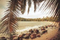Ramo della palma sulla bella spiaggia nel clima tropicale Oceano e boschetto di legno su paesaggio a tempo soleggiato Fotografie Stock