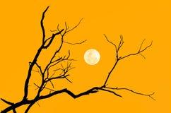 Ramo della siluetta dell'albero Fotografia Stock