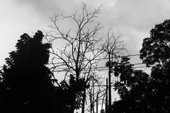 Ramo della siluetta dell'albero asciutto Fotografia Stock