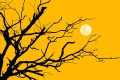 Ramo della siluetta dell'albero con la luna Fotografia Stock