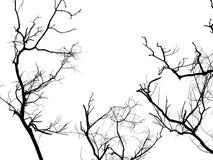 Ramo della siluetta dell'albero morto isolato Fotografia Stock