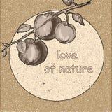 Ramo delle mele con le foglie in una seppia Fotografia Stock Libera da Diritti