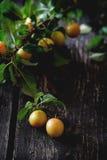 Ramo delle prugne gialle Fotografia Stock Libera da Diritti