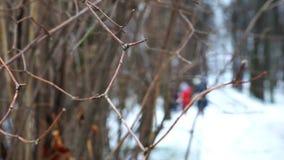 Ramo desencapado de uma árvore que balança no vento no inverno video estoque