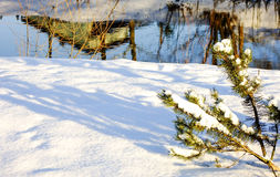 Ramo di abete nella neve Fotografia Stock Libera da Diritti