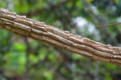 Ramo di albero Fotografia Stock Libera da Diritti