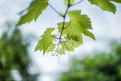 Ramo di albero Fotografia Stock