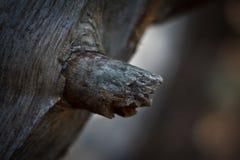 Ramo di albero Fotografie Stock