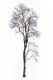 Ramo di albero Immagine Stock Libera da Diritti