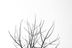 Ramo di albero Immagini Stock
