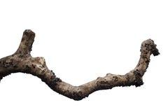 ramo di albero asciutto immagine stock
