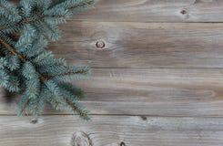 Ramo di albero attillato blu su legno rustico Fotografia Stock Libera da Diritti
