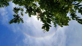 Ramo di albero con l'anello di alone del sole in cielo fotografia stock