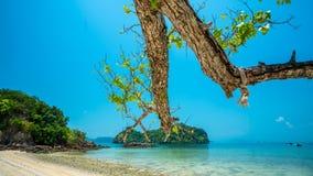 Ramo di albero con la vista dell'isola del mare immagine stock