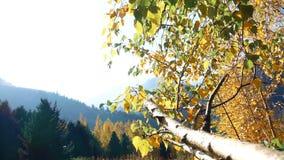 Ramo di albero con le foglie di autunno archivi video