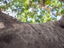 Ramo di albero con le foglie nei precedenti Fotografia Stock Libera da Diritti