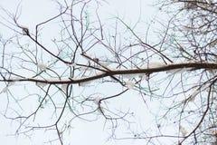 Ramo di albero con neve con il cielo immagine stock