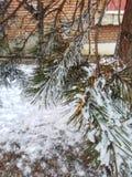 Ramo di albero con neve un giorno di inverno fotografie stock