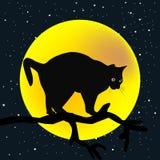 Ramo di albero con un gatto nei precedenti della luna Fotografie Stock Libere da Diritti