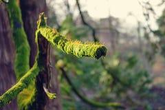 Ramo di albero coperto dai moos fotografia stock