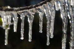 Ramo di albero coperto in ghiaccioli Fotografia Stock
