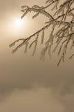 Ramo di albero coperto nel gelo Fotografie Stock