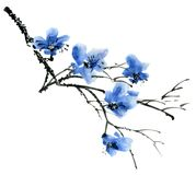 Ramo di albero del fiore Immagini Stock Libere da Diritti