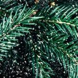 Ramo di albero dell'abete con i fiocchi di neve come fine del fondo su Christma Fotografie Stock