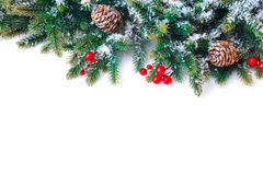 Ramo di albero dell'abete isolato su bianco Immagine Stock