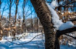 Ramo di albero isolato nella regione selvaggia della foresta Immagini Stock