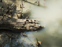 Ramo di albero morto che si sbiadisce nella superficie della palude fotografia stock
