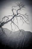 Ramo di albero nell'inverno Fotografia Stock Libera da Diritti
