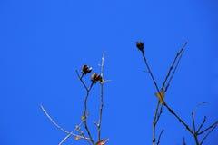 Ramo di albero piano contro cielo blu Fotografia Stock Libera da Diritti