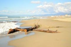 Ramo di albero sulla riva di mare immagini stock libere da diritti