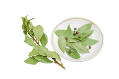Ramo di alloro, delle foglie della baia e delle quattro spezie sul piattino Immagini Stock