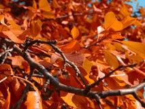 Ramo di autunno con le foglie d'ingiallimento fotografia stock