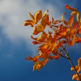 Ramo di autunno contro il cielo fotografia stock