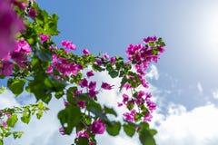 Ramo di fioritura dei fiori davanti al cielo brillante fotografia stock