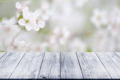 Ramo di fioritura della ciliegia sopra la tavola o il bordo di legno leggera anziana Fotografia Stock Libera da Diritti