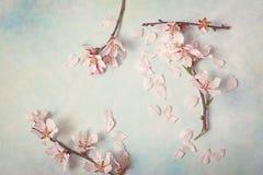 Ramo di fioritura della primavera su fondo astratto Fiori della mandorla immagine stock libera da diritti