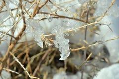Ramo di ghiaccio Immagini Stock