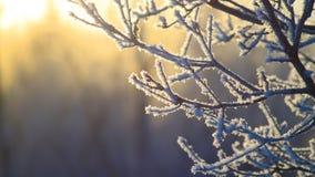 Ramo di inverno Fotografie Stock Libere da Diritti