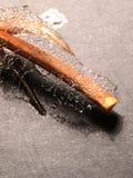 Ramo di legno asciutto Immagine Stock