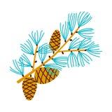 Ramo di Natale del pino con i coni Fotografia Stock Libera da Diritti