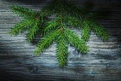 Ramo di pino sul bordo di legno fotografie stock libere da diritti